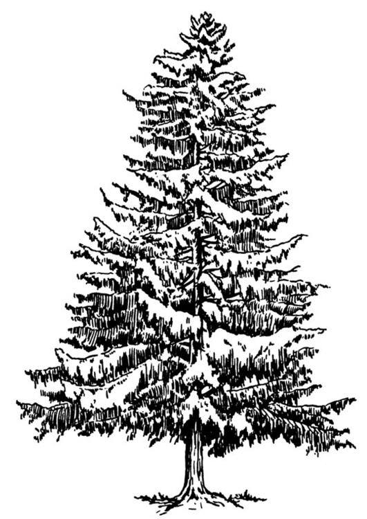 Clipart Tannenbaum Schwarz Weiß.Baum