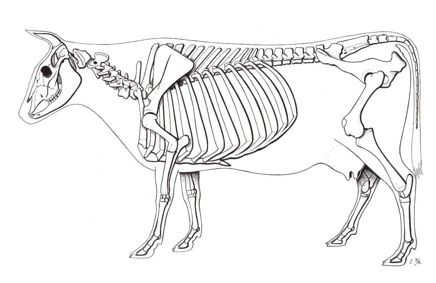 Ziemlich Frosch Skelett Anatomie Zeitgenössisch - Anatomie Von ...